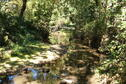 Creek Photo 3