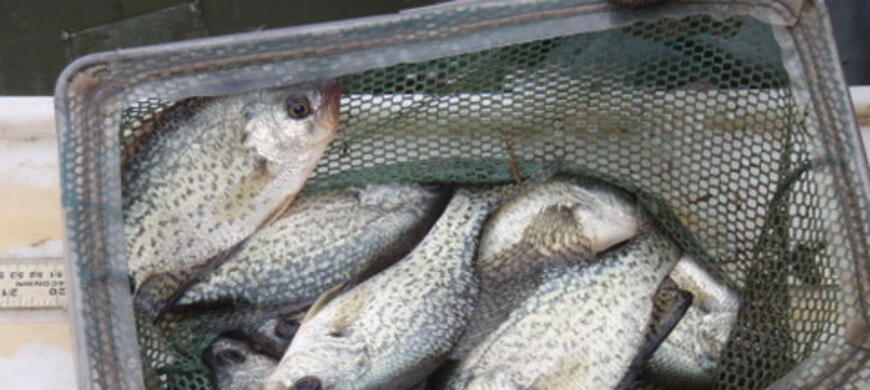 Brown state fishing lake northeast region fishing for Kansas fish records