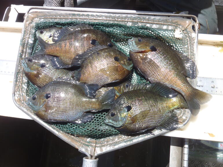 Lvsl bg leavenworth sfl gallery leavenworth state for Kdwpt fishing report