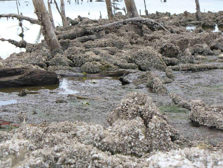 El dorado reservoir zebra mussel infestation 3 region 4 for Kdwpt fishing report