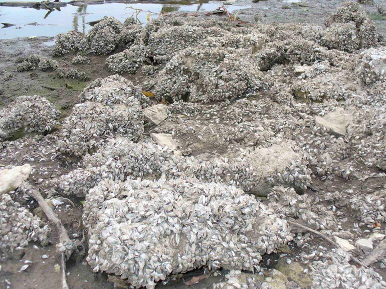 El dorado reservoir zebra mussel infestation 4 region 4 for Kdwpt fishing report