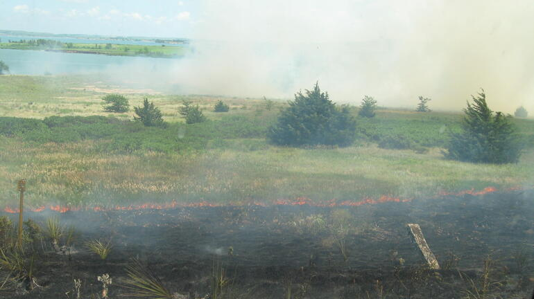 Prescribed Summer Burn - Wilson Wildlife Area - 16 July 2010