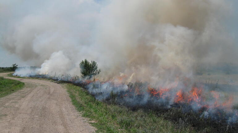 Prescribed Summer Burn - Wilson Wildlife Area - 2010