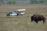 Friends of Sandsage Bison Range Tour