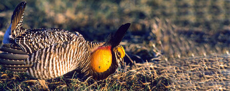 THE 29TH PRAIRIE GROUSE TECHNICAL COUNCIL IN HAYS OCT. 4-6