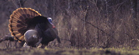 FLINT HILLS GOBBLERS BANQUET AND AUCTION JUNE 18