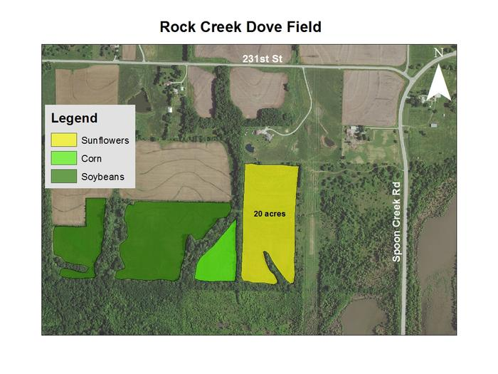 Rock Creek Dove Field