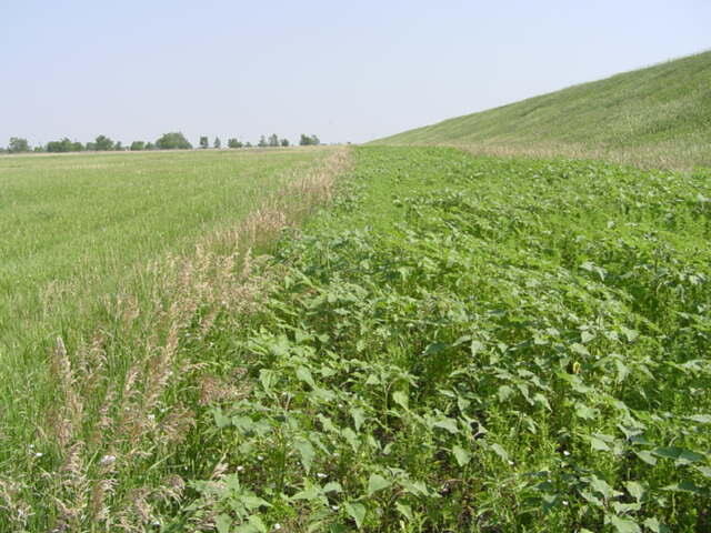 idle foodplot = perfect for pheasant and quail chicks