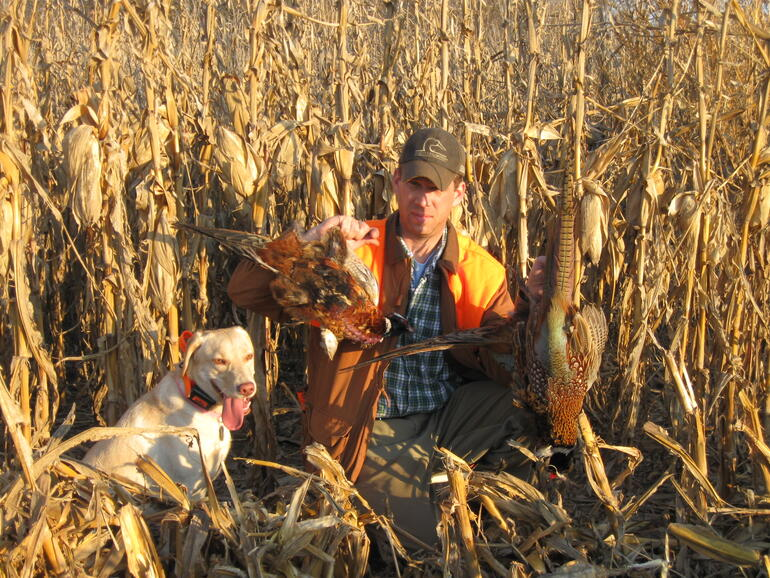 Pheasants in the corn