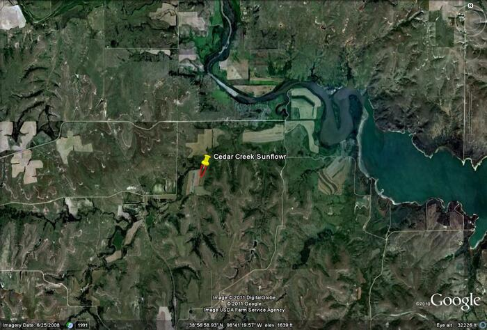 Wilr cedar creek sunflower field map images wilson for Kdwpt fishing report