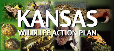 Public Input Needed for State Wildlife Action Plan