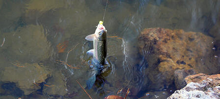 Thirty-Three Fishing Spots to Catch Trout in Kansas