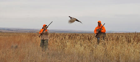 Plan Your Kansas Pheasant And Quail Hunt Now