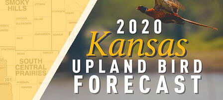 Kansas' 2020 Upland Game Bird Seasons Look Promising