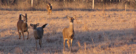 MOTORISTS BEWARE: DEER ON THE MOVE NOW