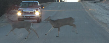 MOTORISTS BEWARE: DEER ON THE MOVE IN NOVEMBER