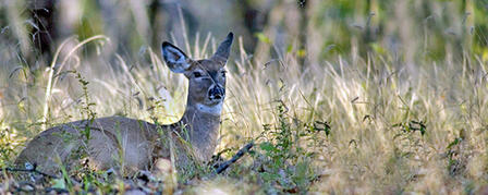 FIRST EVER PRE-RUT WHITETAIL ANTLERLESS SEASON OPENS OCT. 12