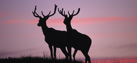 APPLY NOW FOR COMMISSION BIG GAME PERMITS