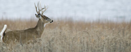 KANSAS FIREARM DEER SEASON OPENS NOV. 30