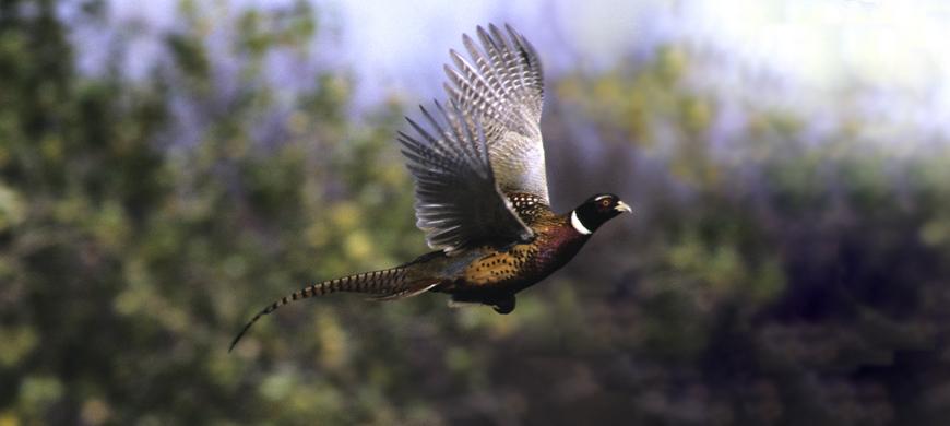 Waconda lake to host annual youth and women s pheasant for Glen elder fishing report