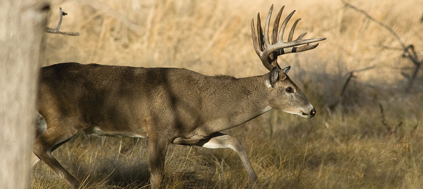 Commission big game permits raise funds for conservation for Kansas fish and game