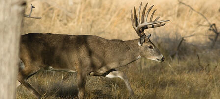 Commission Big Game Permits Raise Funds For Conservation