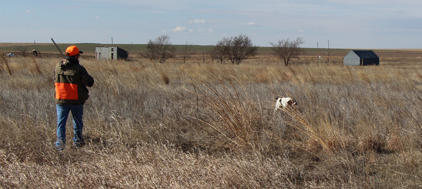 Pheasant and quail seasons continue tradition 11 5 15 for Kdwp fishing report
