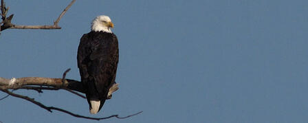 TUTTLE CREEK LAKE HOSTS ANNUAL EAGLE DAY JANUARY 5