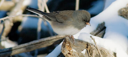 Learn to ID Birds At a Christmas Bird Count