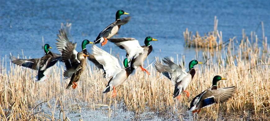 Deer and waterfowl hunting regulations to be considered for Louisiana non resident fishing license