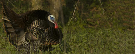 TURKEY FEDERATION CHAPTER YOUTH HUNT APRIL 7