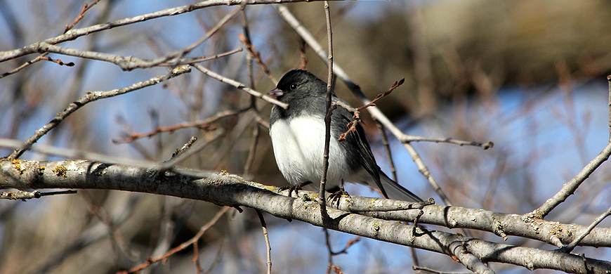 Participants Needed for Great Backyard Bird Count