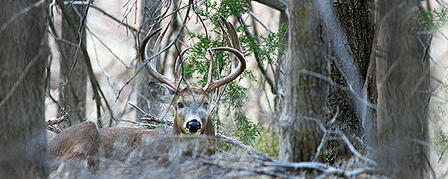 HUNTER SURVEY PARTICIPATION VITAL FOR DEER MANAGEMENT