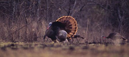 Westar Energy Hosts Young Turkey Hunters
