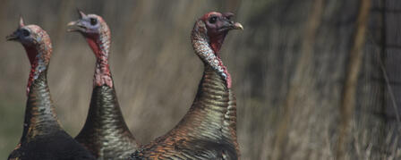 2012 SPRING TURKEY ATLAS NOW AVAILABLE