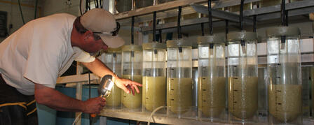 KDWPT BIOLOGISTS LOOK TO CULTIVATE 80 MILLION WALLEYE EGGS