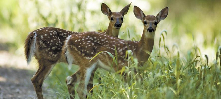 Wildlife photography Keep-Wildlife-Wild