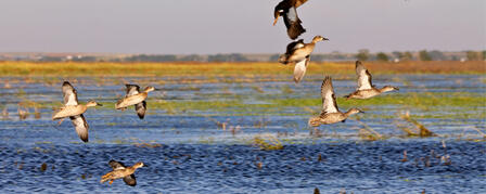 KANSAS WILDLIFE, PARKS AND TOURISM COMMISSION EXAMINES EARLY MIGRATORY BIRD SEASONS