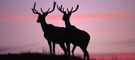 Commission Approves Hunting Seasons, Removal of Duplicate License Fee