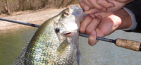 Crappie Days Are Here Again