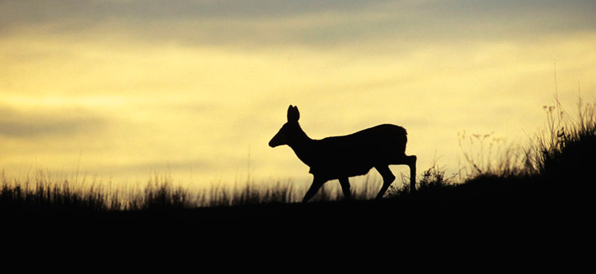 2015 Nonresident Deer Permit Draw Results Available