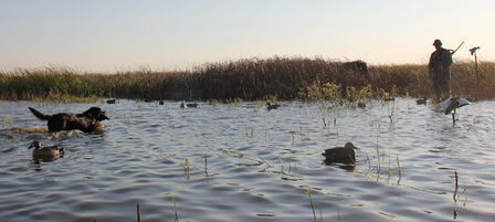 Kansas' Waterfowl, Antelope and Elk Seasons Set