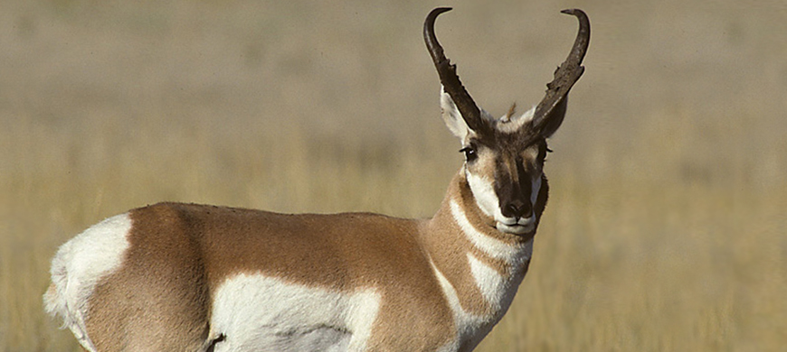 KWPT Commissioners Approve Select Deer, Antelope Seasons