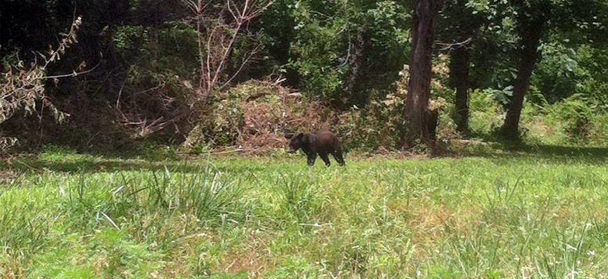 Black Bear Spotted in Cherokee County