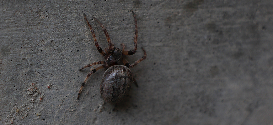 Learn About Spiders During Hands-on Evening Workshop