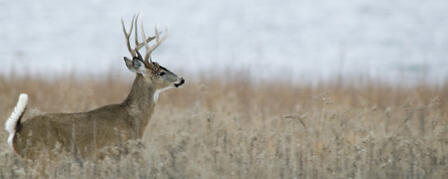 KDWPT TO HOST DEER INFORMATION NIGHTS