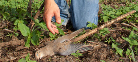 Register Now For Youth Dove Hunt at Clinton Wildlife Area