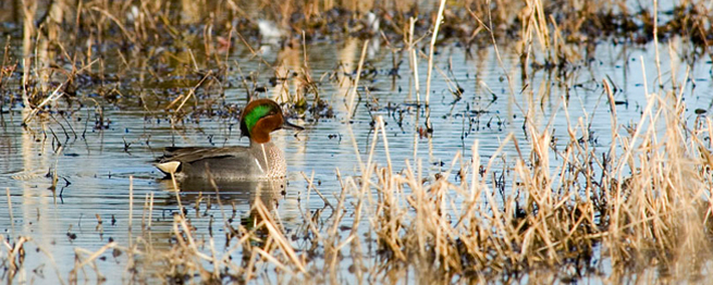 2014 KANSAS WATERFOWL SEASON OUTLOOK