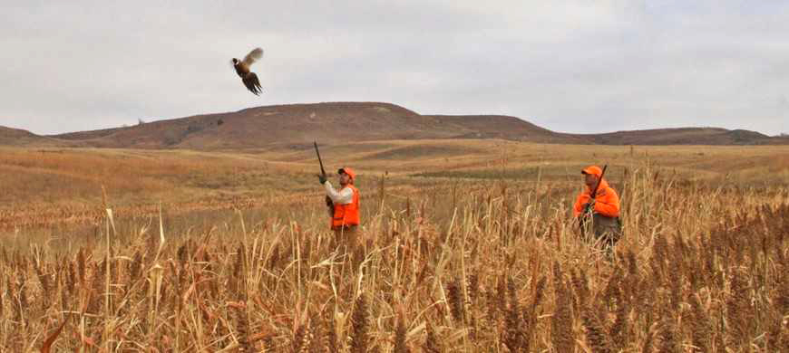2017 Upland Bird Hunting Forecast Available