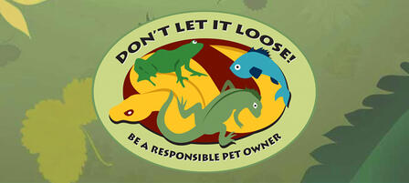 Please Don't Release Unwanted Pets Into The Wild